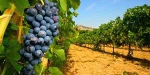 Bordeaux saint emilion